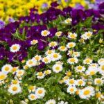 空き家、空き地には花を植える。超激安のリフォーム。
